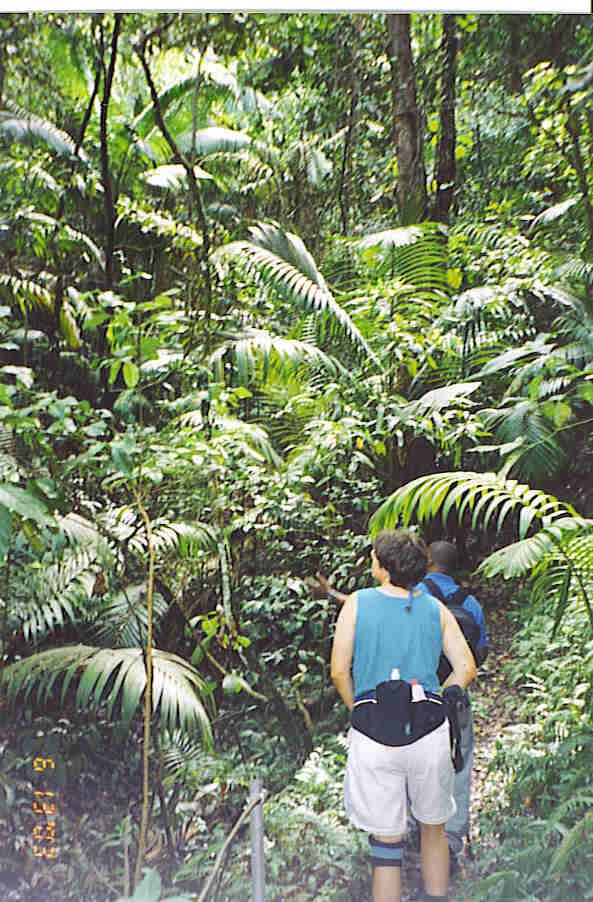 Mount Liamuiga rain forest hike, St. Kitts, BWI.