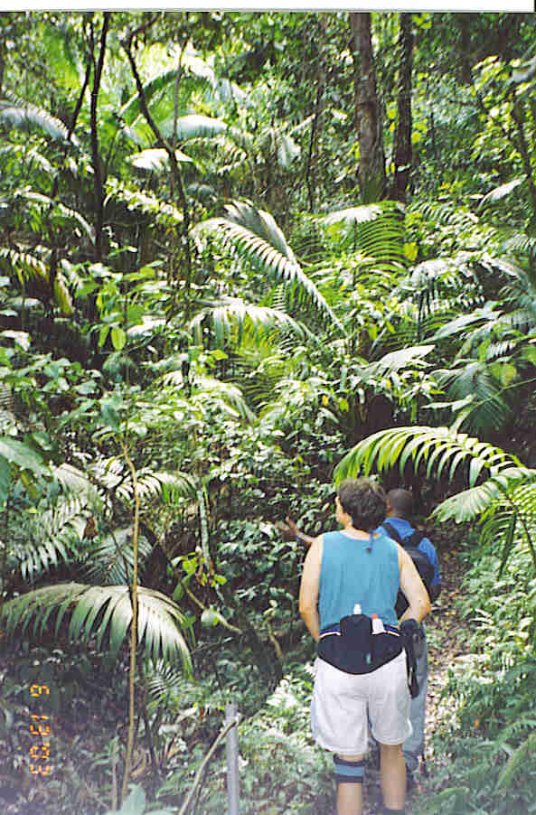 Mount Liamuiga rain forest hike, St. Kitts, BWI.