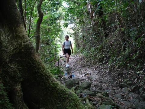 Mount Sage Natl Park trail, Tortola, BVI