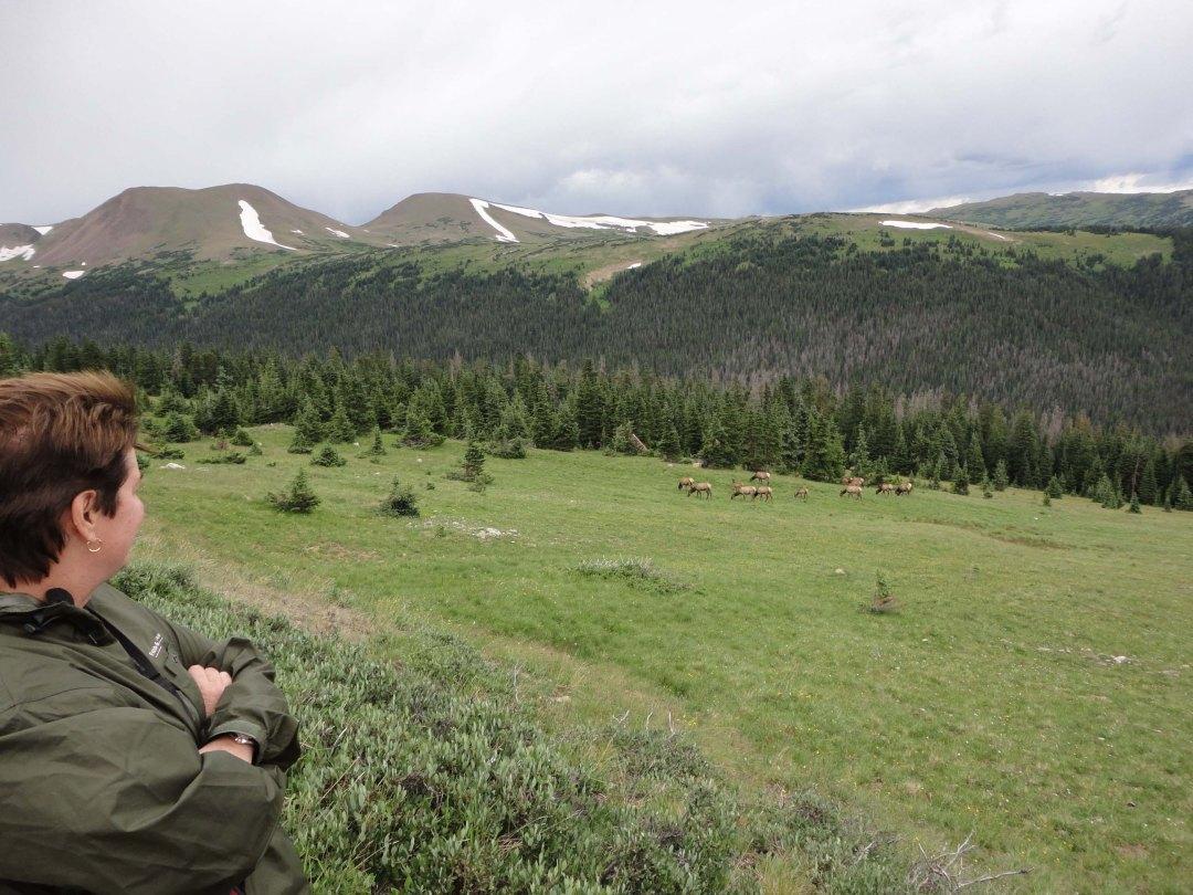 Lynn eyes Elk herd, Rocky Mountain National Park, CO.