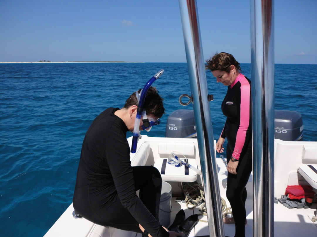 Another reef to snorkel, off Salt Cay, Turks & Caicos.