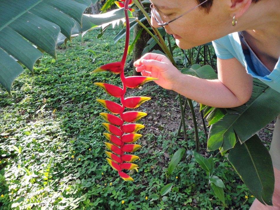 Bird of Paradise, Pico Bonito Lodge rounds, Honduras.