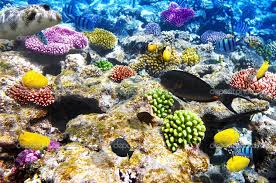 Great Barrier Reef colorful corals