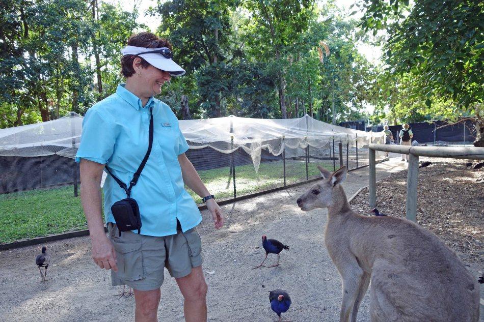 Kangaroo chat