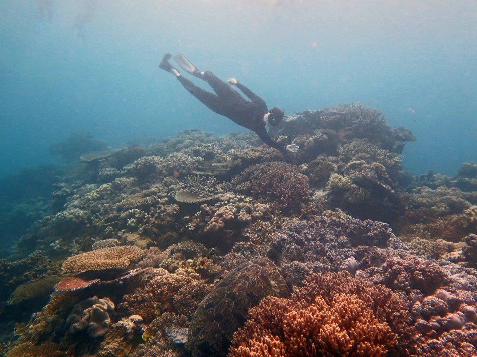 Lynn and large turtle, Great Barrier Reef