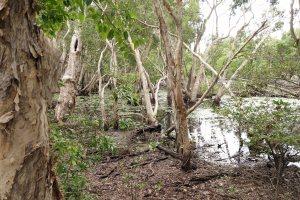 PaperbarkSwamp