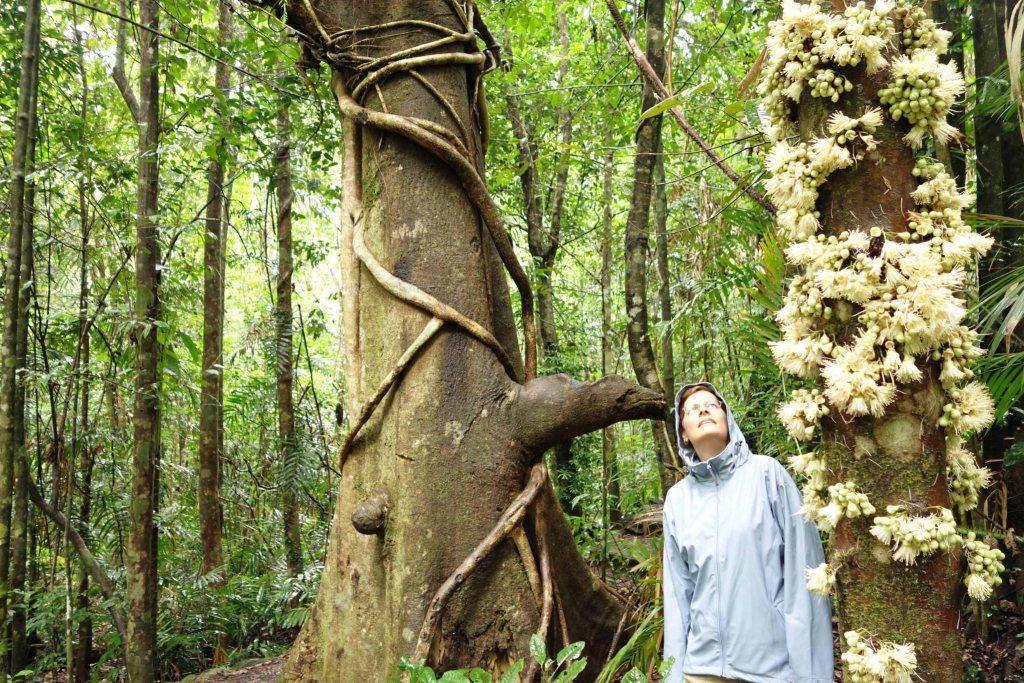 Rainforest Flowering trees
