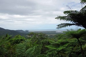 Coastal rainforest QLD