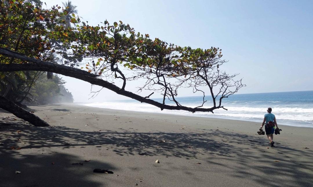 Robin walks beach, Osa peninsula, Costa Rica