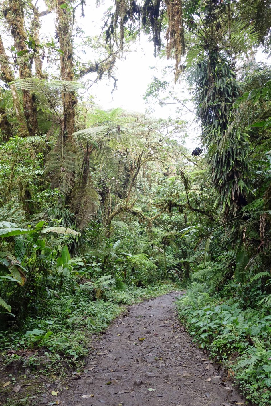 Monteverde Cloud Forest trail, Costa Rica