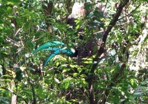QuetzalButt
