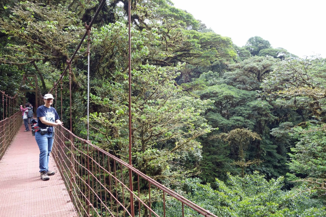 Robin, hanging bridge, Monteverde Cloud Forest reserve, Costa Rica