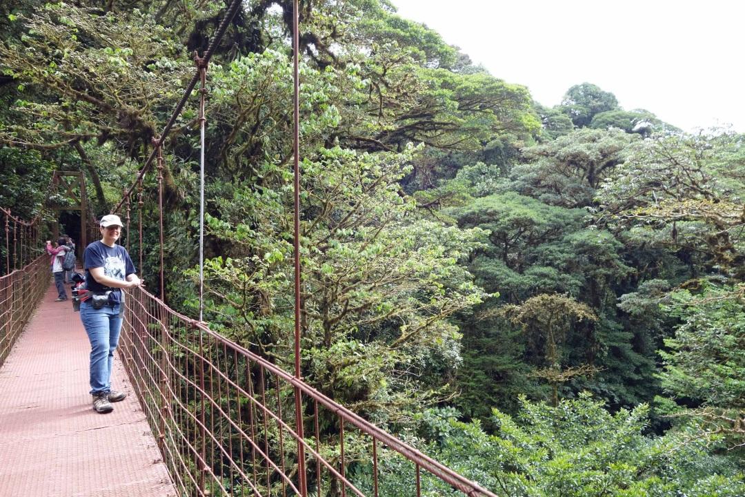Robin, hanging bridge, Monteverde Cloud Forest reserve, Costa Rica