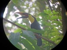 toucan pants
