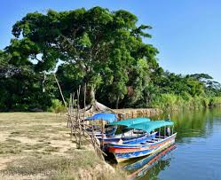 Launchas docked up a jungle river, Panama, C.A.
