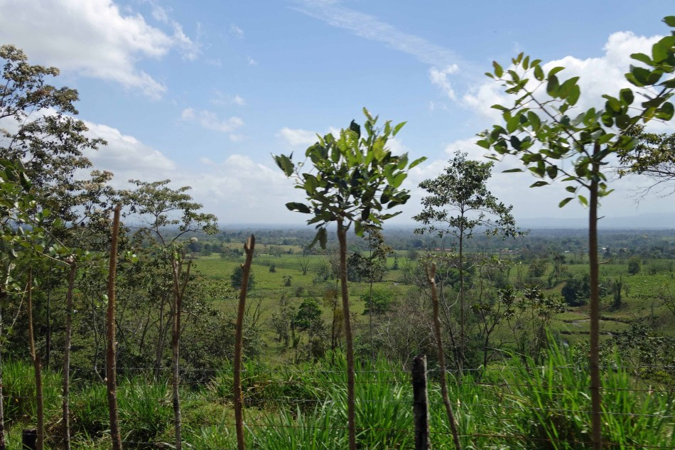TreeFenceLo